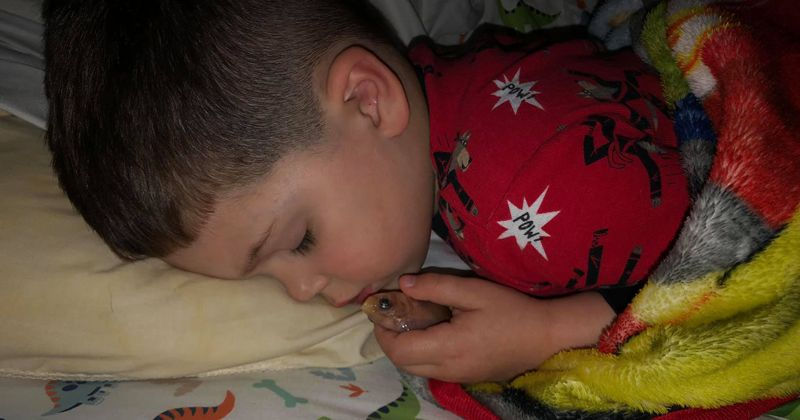"""4-Year-Old Accidentally Kills His Pet Fish After Cuddling It All Night In Bed: """"I Just Wanted To Pet It"""""""