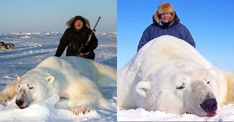 Trophy Hunters Pose With Dead Polar Bears In Company Ad Offering $44,000 Hunting Trips