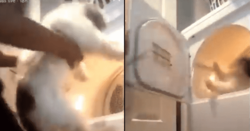 Heartless Girl Puts Dog In Dryer, Switches It On And Makes A Video Of It