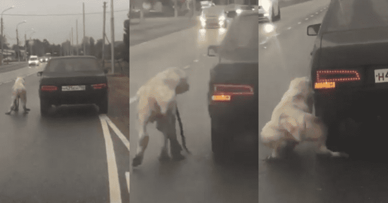 Cruel Owner Drags Helpless Dog Down The Highway As It Struggles In Pain