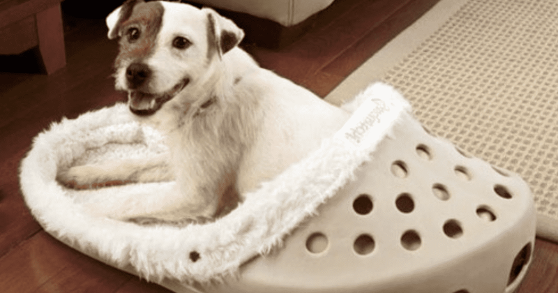 You Can Now Get Giant Shoe-Shaped Beds For Your Pets