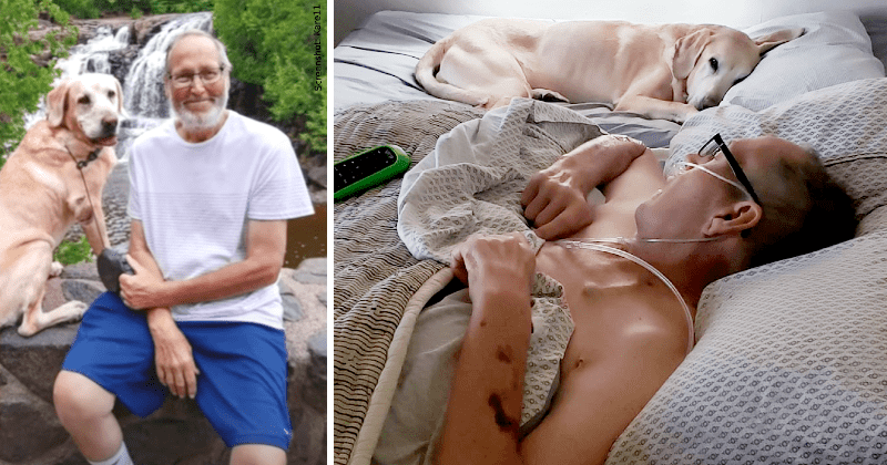 "Veteran And His Loyal Dog Die Within Hours Of Each Other: ""He Couldn't Be  Without My Dad"""